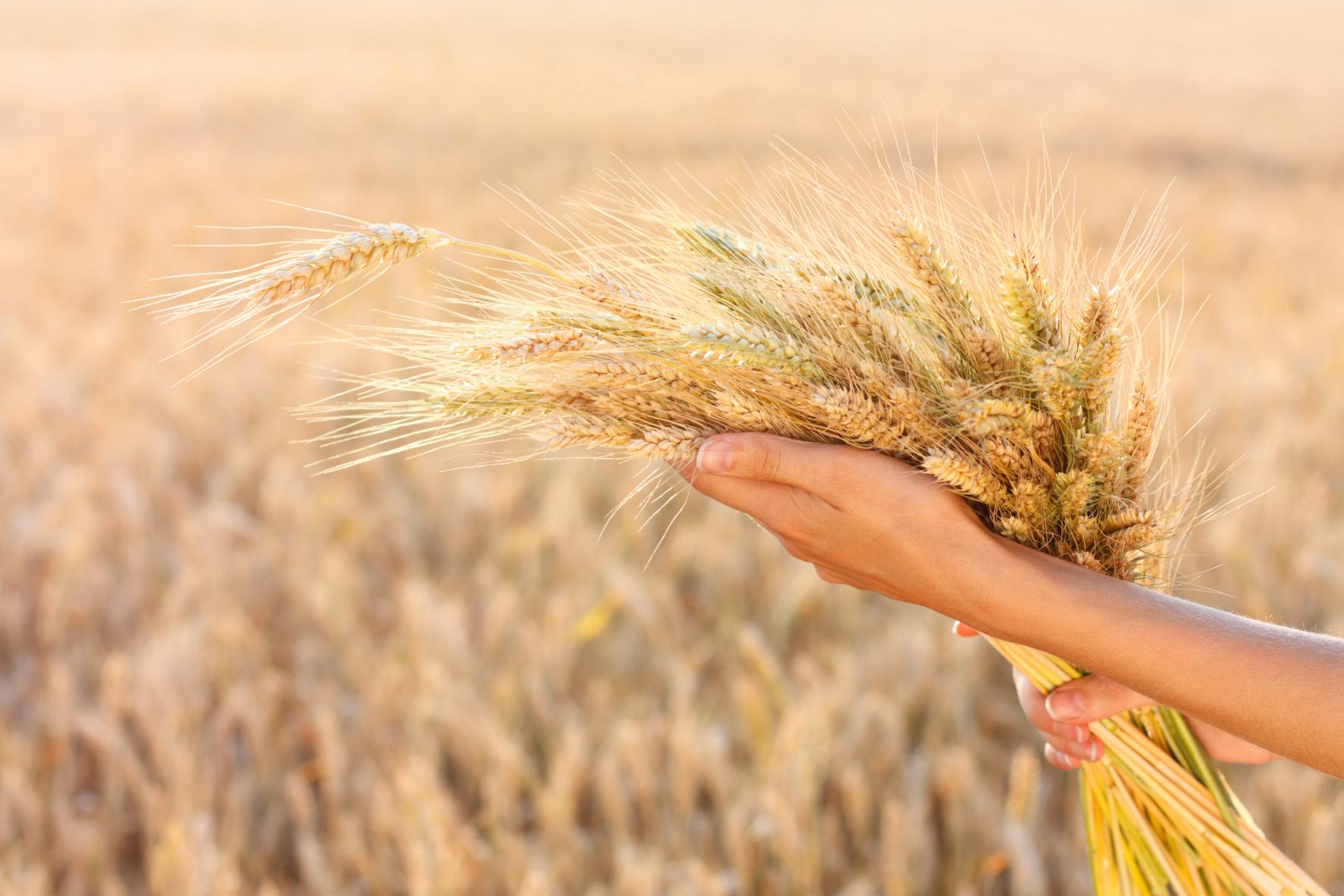 Ритуал на годовой достаток Семь полей - Тридевятое Царство