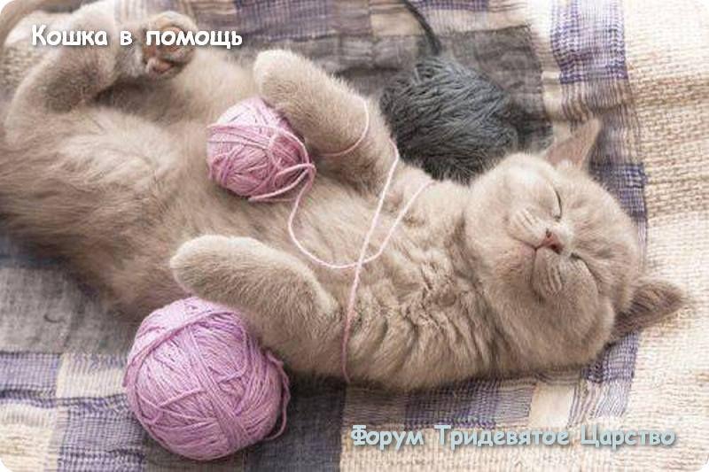 Кошка в помощь