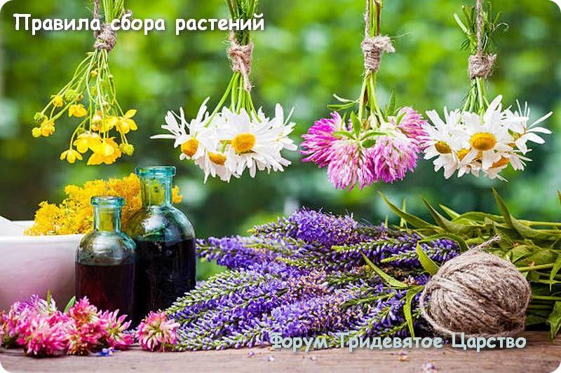 Правила сбора растений